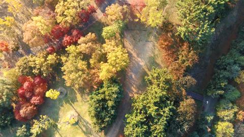 Korea downtown autumn maple leaf Ansan Lake Park 05 Live Action