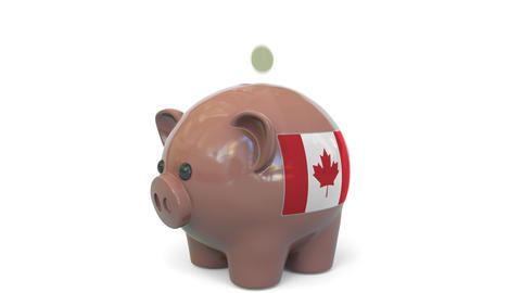Putting money into piggy bank with flag of Canada. Tax system system or savings Live Action