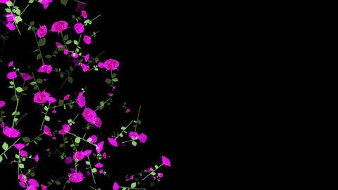 Falling Roses Videos animados