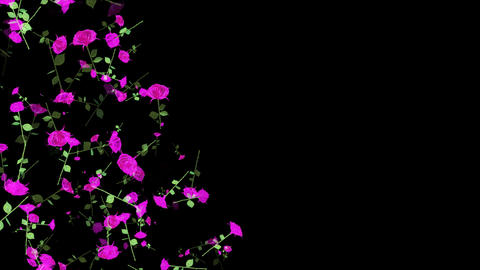 Falling Roses Animation