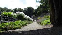 Path through flower garden with flourishing greenery leaves in breeze and a shad Footage