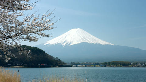 Mount Fuji and Sakura tree in Japan Footage