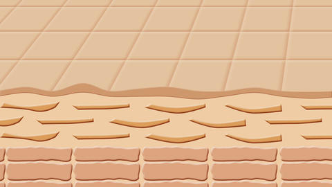 Skin 肌面 断面図 Animation