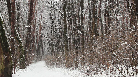 Path in winter park. Snow is falling down from the forest trees Footage