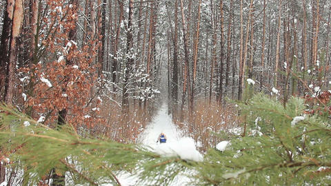 Skier on his way in winter forest (park) Footage
