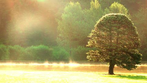 Autumn Morning Mist and Tree. UHD Footage