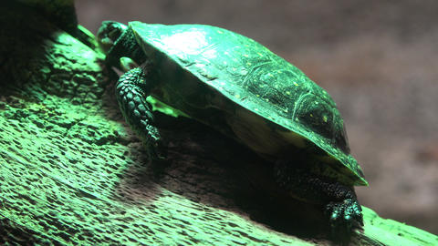 Small Turtle or Tortoise Live Action