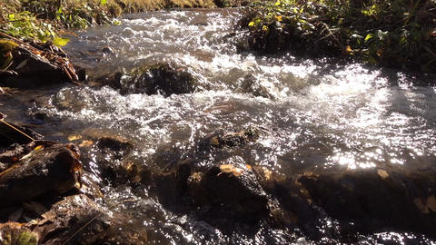 Closeup of mountain stream ビデオ