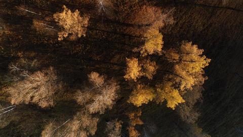Autumn forest ビデオ