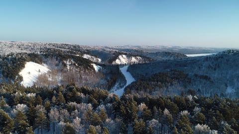 Winter Forest Landscape ビデオ