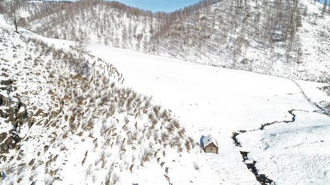 Herd of Wild siberian deer ビデオ