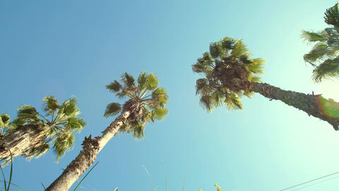 Tall palm trees and sun Stock Video Footage