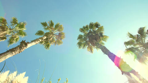 Tall palm trees and sun Footage