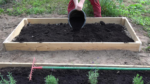 farmer pouring black soil humus to new wooden raised bed for medical herbs and flowers Live Action