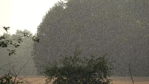Midsummer landscape and sunny rain drops background Live Action