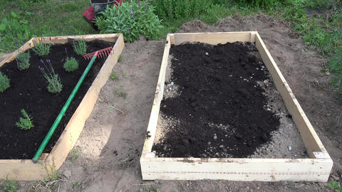 gardener pouring black soil humus to new wooden raised bed for herbs and flowers Live Action