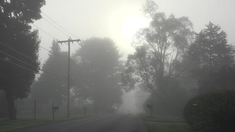 Foggy Morning and Misty Cloud Footage
