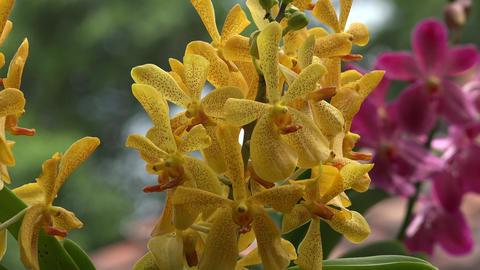 Yellow Flowers in Flower Garden Footage