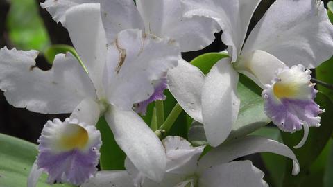 White Flower in Garden Live Action