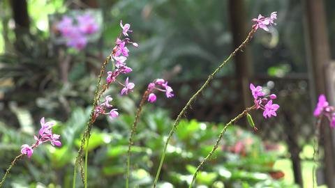 Purple Flowers in Flower Garden Stock Video Footage