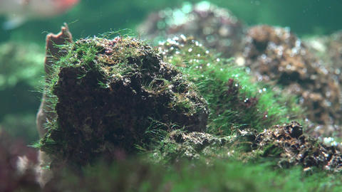 Underwater Rock and Mossy Plant Life Footage
