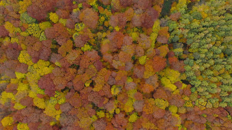 View from the height on a bright autumn forest as a background ビデオ