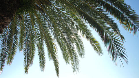 Palm leaves on sky background Live Action