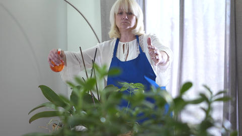 Confident blond Caucasian woman woman spraying water on domestic plants and Footage