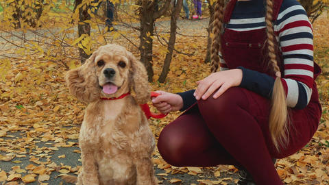 Cute smiling girl stroking brown dog in park GIF
