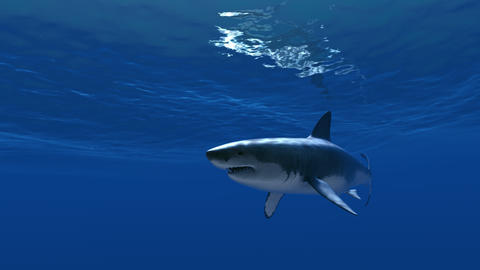 Great White Shark crosses the screen. 4k Videos animados