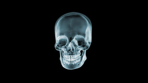 Skull X-Ray spinning. Loop. 3D animation. 4K Videos animados