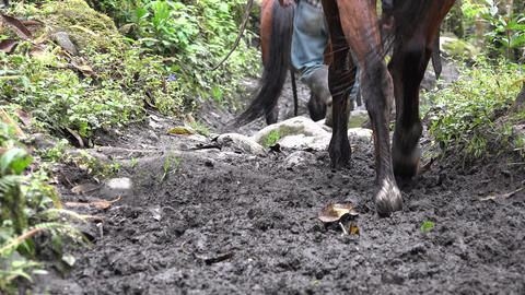 Horseback Riding in Forest Trail Footage