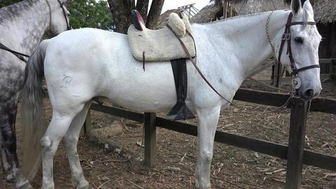 Horses, Farm Animals, Equine Footage