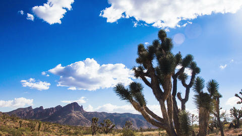 Time Lapse - Joshua Tree in Desert Mojave with Beautiful Cloudscape Footage
