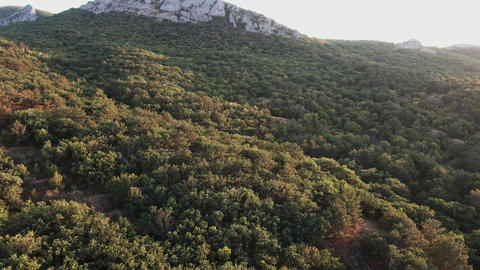 Aerial shot Flight above mountain slopes with pine trees filled with dusk Live Action