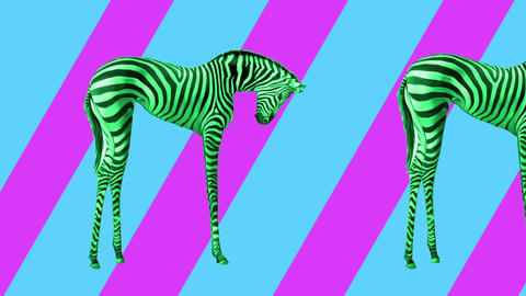 Animation art. Looping graphic animation in zin art style. Many zebras are Footage