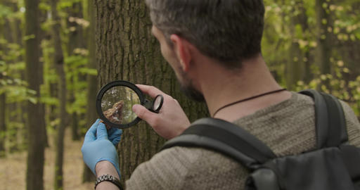 Back view of Caucasian man looking at tree bark piece through magnifying glass Footage