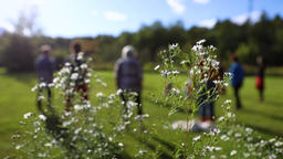 Women exercising in sun with wildflowers Footage