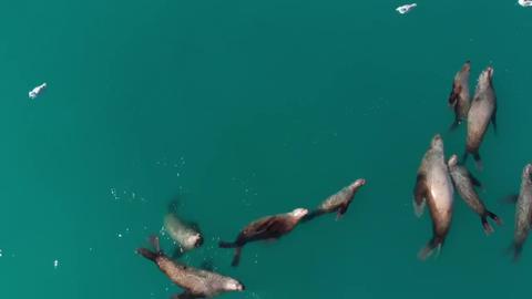 Sea lions フォト