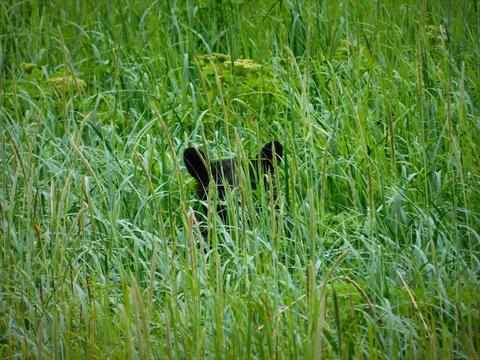 Bear hiding in the brush フォト