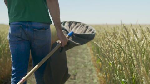 Male farmer walking on ripe wheat field GIF