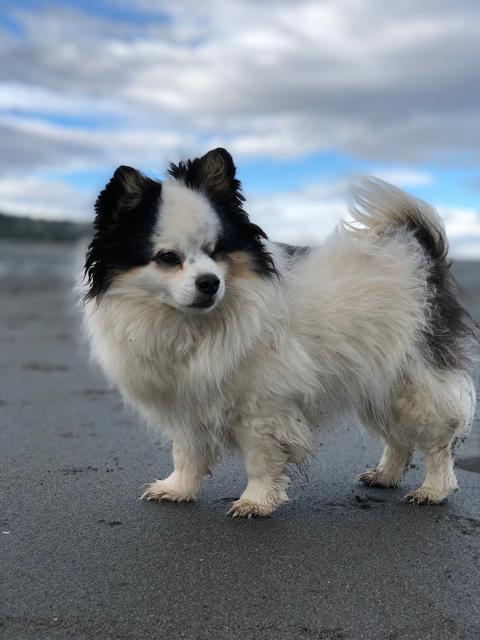 My dog Diego Photo