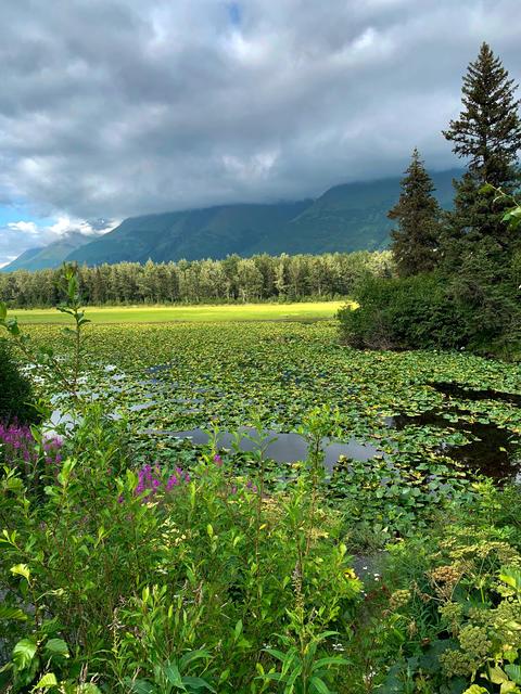 Alaska pond フォト