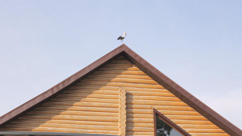 A large white stork stands on the roof of the house Archivo