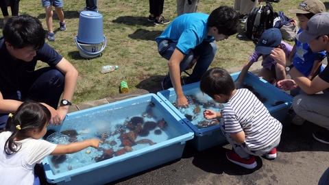 Children And Kids Playing At Marine Festival In Hakodate Hokkaido Live Action