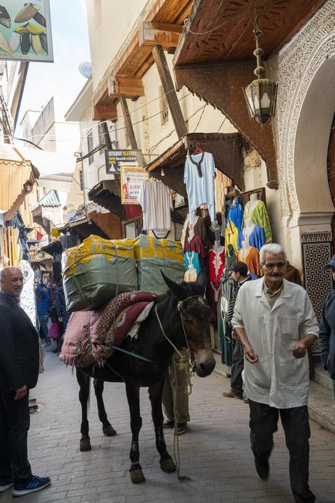 transport donkeys in the medina Fotografía