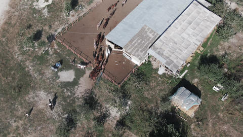 Top view Shepherds drive horses to stall ビデオ