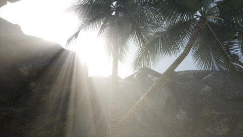 Big Palms in Stone Cave with Rays of Sunlight Live Action