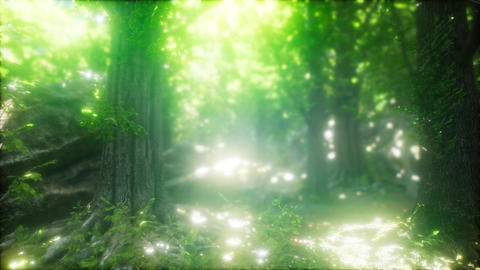 Forest of Beech Trees illuminated by Sunbeams GIF