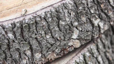 Firewood stock pieces ビデオ